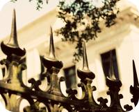 Savannah Fence-1