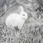 """HaleyS_Rabbit"" by NeighborhoodCenter"