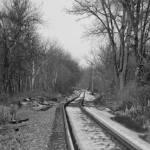 """Snowy Tracks"" by WildAboutNaturePhotography"