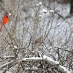 """Winter Scene"" by WildAboutNaturePhotography"