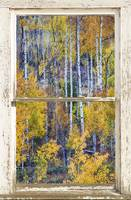 Aspen Tree Magic Cottonwood Pass White farm House