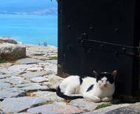 Nafplio Greece: Cat
