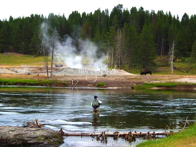 Stunning fly fishing artwork for sale on fine art prints for Fishing in yellowstone