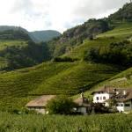 """The Vineyard Hills"" by raetucker"