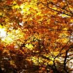 """Seasonal Gift"" by hannahsview"