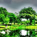 """Garden Series, Botanic Garden Singapore"" by sghomedeco"
