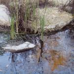 """""""Reeds and Reflection"""" by janesprints"""