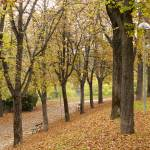 """""""Parco Montagnola"""" by raetucker"""