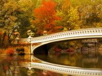 Bow Bridge Beauty