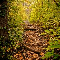 Pathway to Serenity Art Prints & Posters by Irma Mason