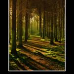 """Forest"" by ImageMonkey"