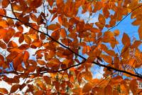 Leaves and Sky