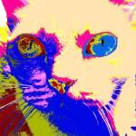 """""""cat I"""" by BebeePino"""