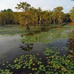 """""""Canoe Trail in Cypress Swamp"""" by last_light"""