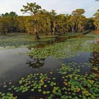Canoe Trail in Cypress Swamp Art Prints & Posters by Warren Price