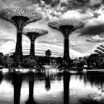 """Garden by the Bay Singapore BW"" by sghomedeco"