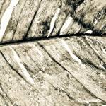 """""""dryleavesinged"""" by NOTOFOTOARTWORKS"""