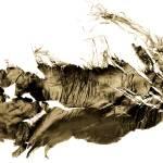 """""""woodpecker"""" by NOTOFOTOARTWORKS"""