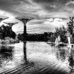 """Garden by the Bay, Garden Singapore Series BW"" by sghomedeco"