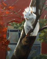 Oberlin squirrel2