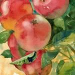 """""""apple tree"""" by schulmanart"""