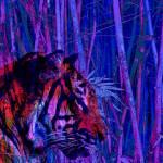 """""""Tiger Spirit"""" by davidmckinney"""