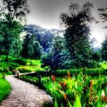 """Singapore Botanic Garden"" by sghomedeco"
