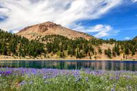 Lupines Lake And Lassen