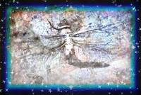 Dragonfly Among the Stars