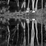 """Cape Cod Landscape Two Chairs On Cape Cod Pond"" by Black_White_Photos"