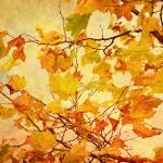 """Autumn Leaves with Texture Effect"" by NatalieKinnear"