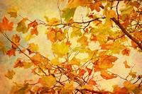 Autumn Leaves with Texture Effect