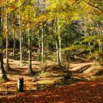 """Autumnal colours in Geres"" by vribeiro"