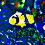 """TROPICAL FISH ART"" by davidmckinney"