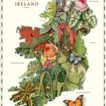 """Map of Ireland with Antique Plants and Flowers"" by redssr03"