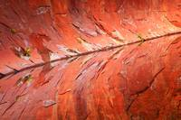 Canyon Wall Abstract