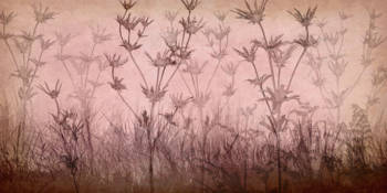 Wildflower Silhouettes Pink