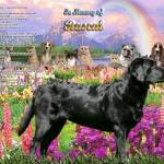 """Black Lab 2 Rainbow Bridge copy"" by heavenlyimages"