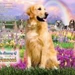 """""""Golden Retriever Rainbow Bridge"""" by heavenlyimages"""