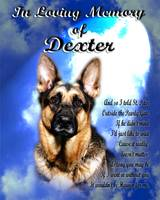 Pet Memorial-Clouds-light-portrait-small