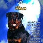 """Pet Memorial-Clouds-light-rottweiler"" by heavenlyimages"