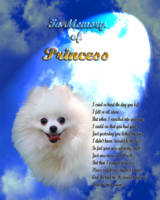 stretched White pomeranian clouds-light-portrait c