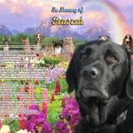 """Black Lab Rainbow Bridge copy"" by heavenlyimages"