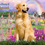"""""""stretched-Golden Retriever Rainbow Bridge copy"""" by heavenlyimages"""