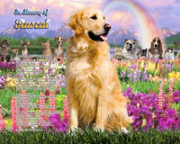 stretched-Golden Retriever Rainbow Bridge copy
