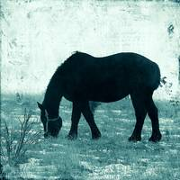 Winter Percheron