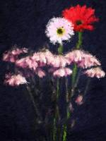 ANDABEL loves daisies 18x24