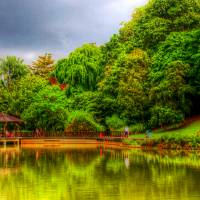 Singapore Botanic Garden, Central Lake Art Prints & Posters by Stamford Photography and Design