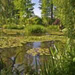 """Claude Monet"