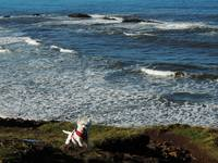 Miss Daisy Enjoying The Pacific Oregon